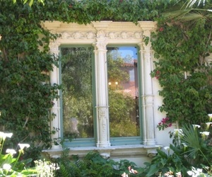 plants, nature, and window image