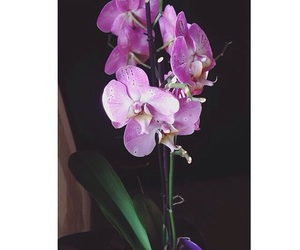 beautiful, flowers, and orchid image