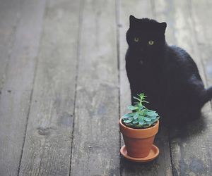 animal, kitty, and succulent image