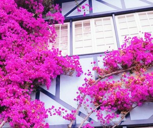 flowers, nice, and pink image