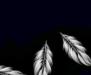 wallpaper, black, and feathers image