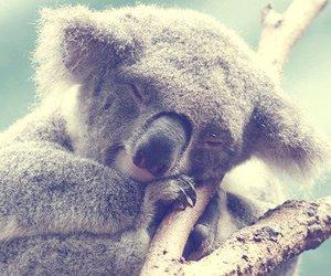 baby, Koala, and sweet image