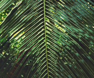 background, exotic, and green image