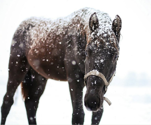 horses, snow, and snowy image