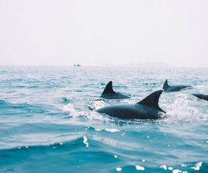 dolphin, sea, and summer image