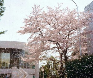 pink, sakura, and japan image