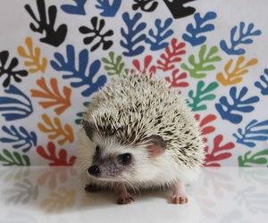 hedgehog, kawaii, and cute image