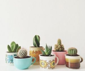 cactus and plants image