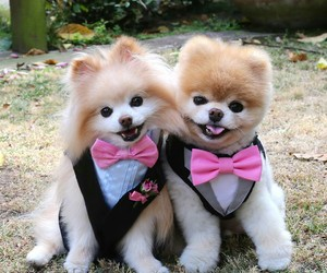 cutest puppies image