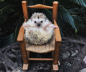 animal, hedgehog, and best friends image