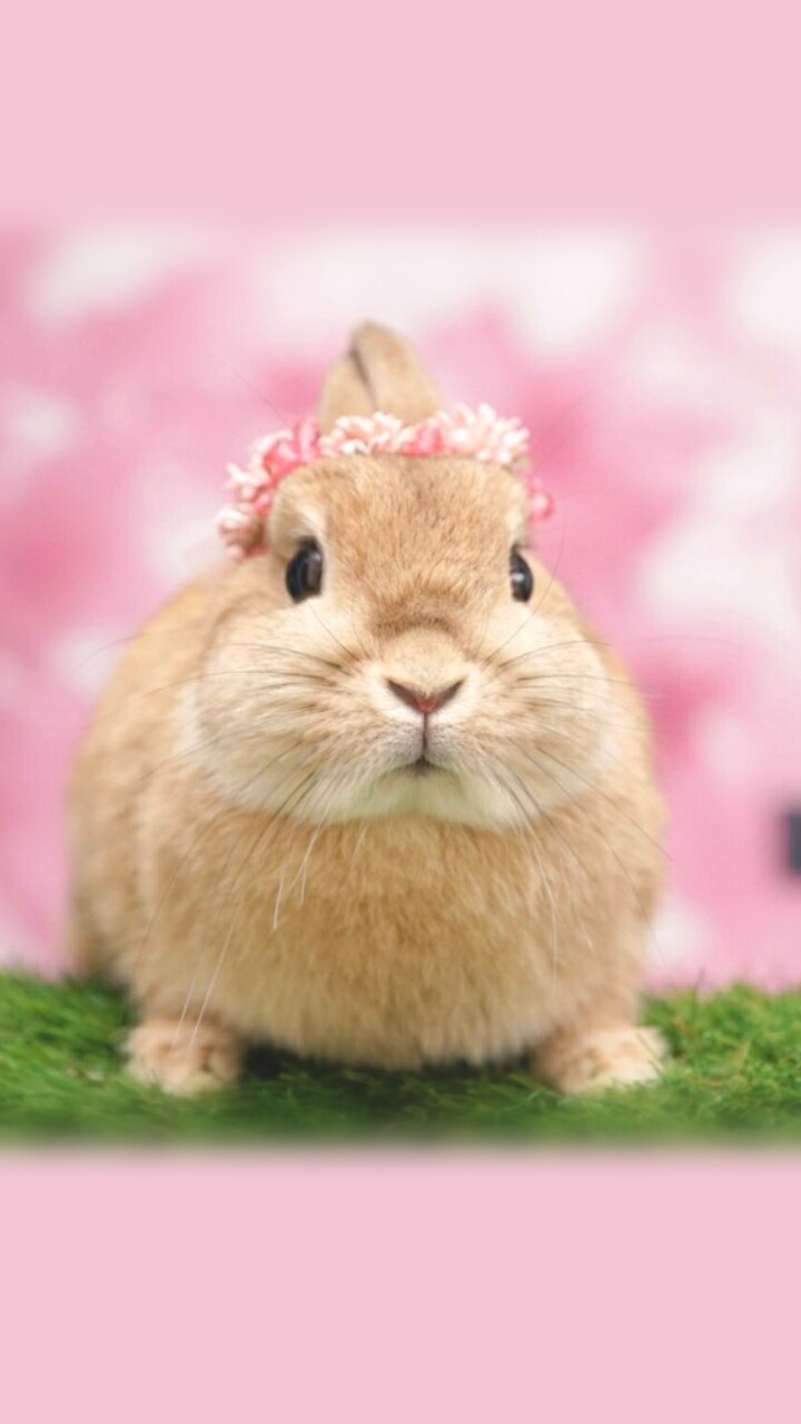 Animals Baby Baby Bunny Background Beautiful Beauty Bunny Cute Animals Cute Baby Cute Bunny Cutie Iphone Nature Soft Still Life Wallpaper Wallpapers We Heart It Wallpaper Iphone Pastel Color Beautiful Animals Wallpapers