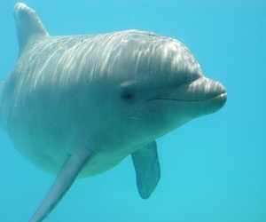 dolphin, underwater, and water image