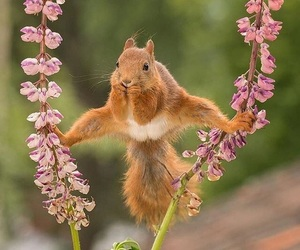 squirrels and animal image