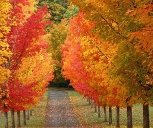 fall, autumn, and trees image