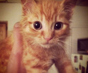 adorable, awww, and eyes image