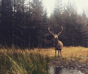 deer, peaceful, and scotland image