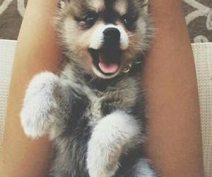 animals, cute, and cachorro image