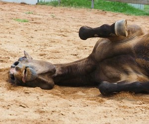 animal, funny, and horses image