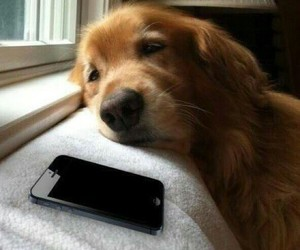 dog, cute, and iphone image