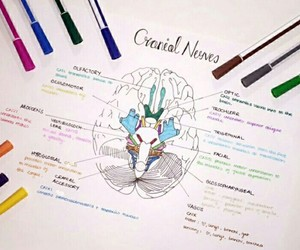 notes, school, and brain image