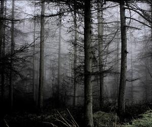 tree, dark, and creepy image