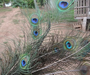 Animais, decoration, and feather image