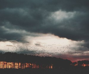 clouds, sky, and birds image