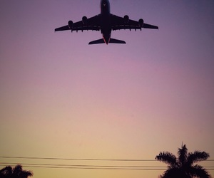 airplane, palms, and sunset image