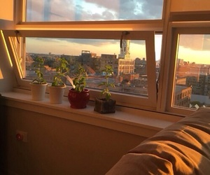 aesthetic, sunset, and plants image