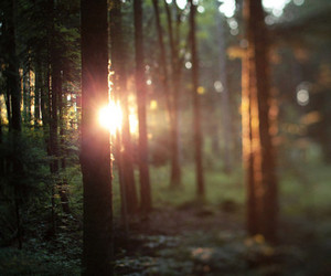 forest, sun, and tree image