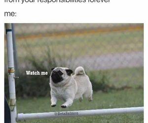 lol, Adult, and dog image