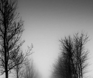 grey, wallpaper, and bosque image