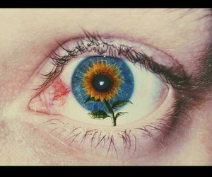 eye, sunflower, and blue image