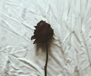analog, analogue, and dead flower image