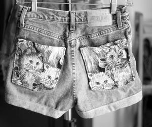 cat, shorts, and fashion image