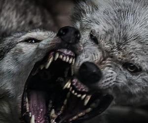 theme, wolf, and animal image