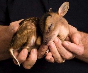animal, deer, and hands image