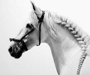 animal, b&w, and horse image