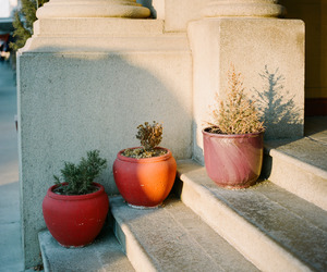 photography, plants, and pots image