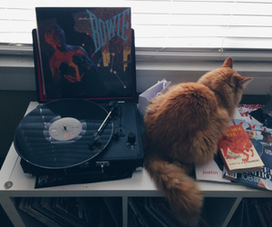 cat, grunge, and music image