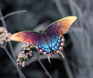butterfly, nature, and flowers image