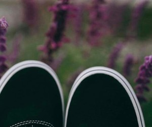 black shoes, garden, and vans image