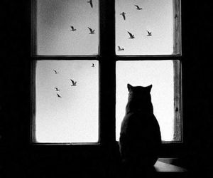 cat, bird, and window image