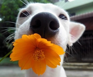 animal, flower, and puppy image