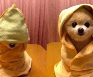 *-*, animal, and dog image