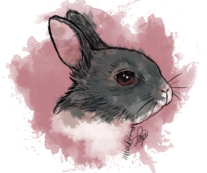 animals, Ilustration, and bunny image