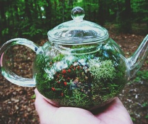 nature, green, and tea image