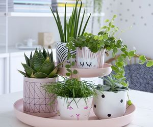 design, home, and flowerpot image