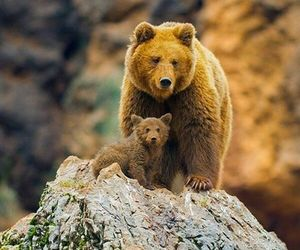 baby, photography, and bear image