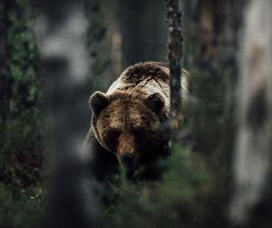 animal, bear, and nature image